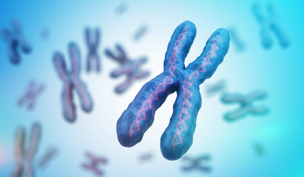 ADN chromosome replication